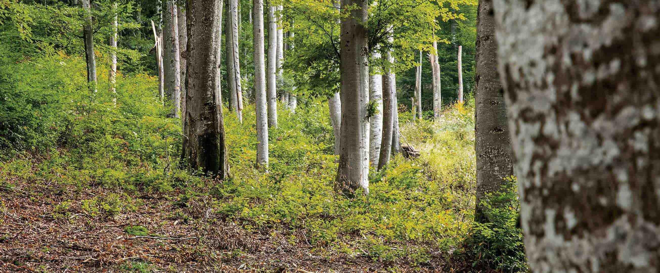 Forest - TENCEL Sustainability Botanic Origin
